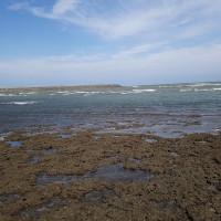 桃園觀新藻礁生態系